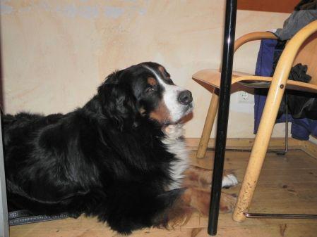 Franz, der Fernsehhund